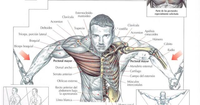 De yodo setochka para el aumento del pecho