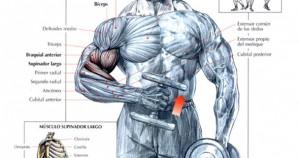curl de bíceps alterno tipo martillo
