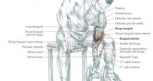 consejos para el curl de bíceps