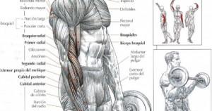 Erroes al hacer curl de bíceps
