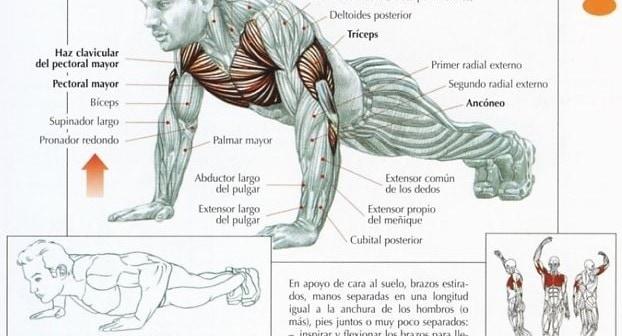 flexiones profundas