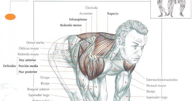 Rutina de ejercicios para hombros