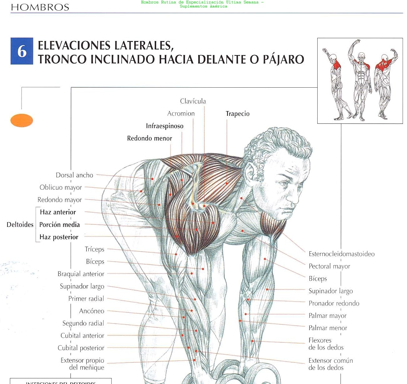 Rutina de ejercicios para hombros ejercicios en casa - Rutinas para casa ...