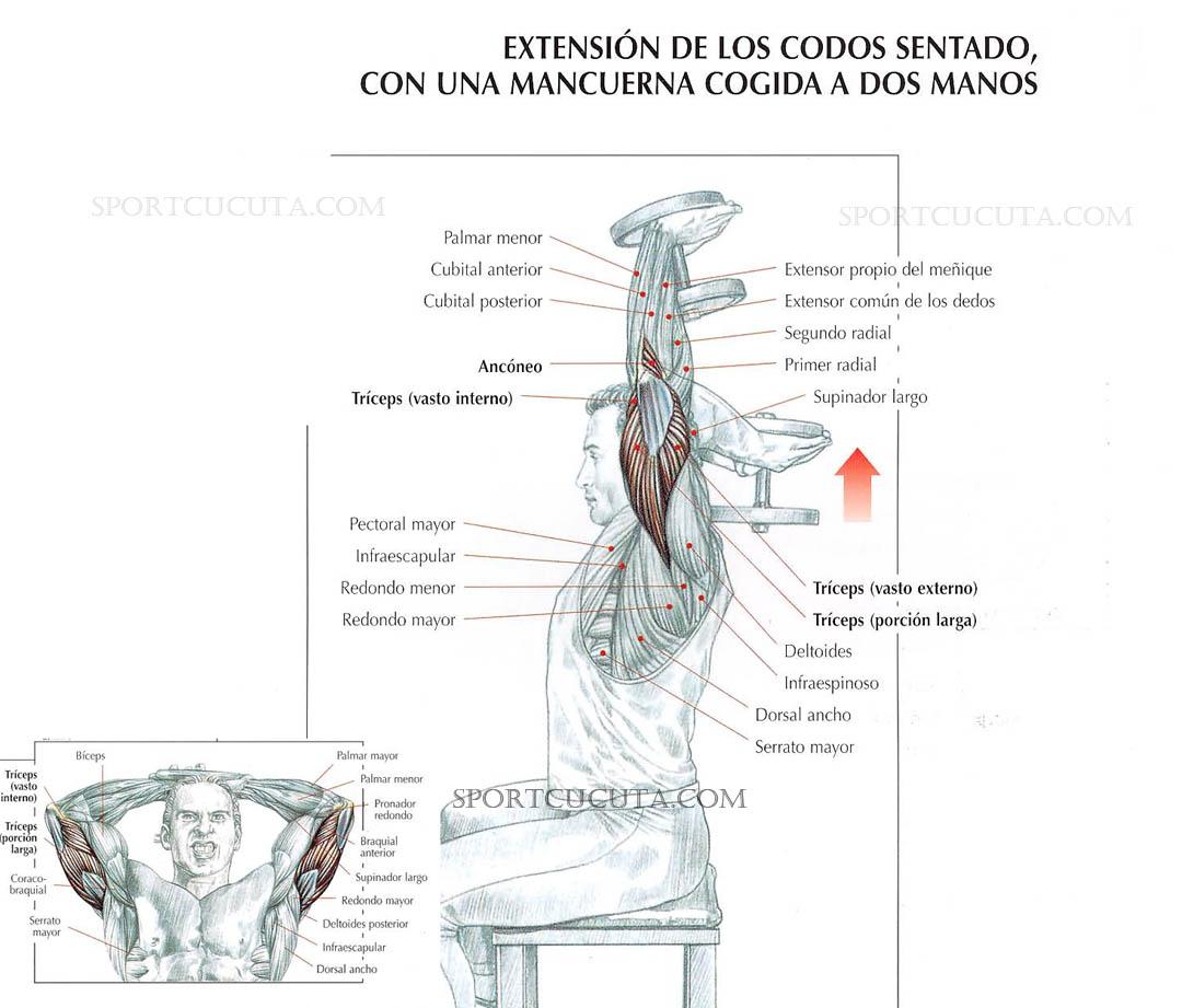 extensión de codo sentado