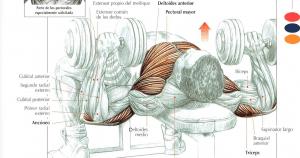 Ejercicios pectorales en casa con pesas
