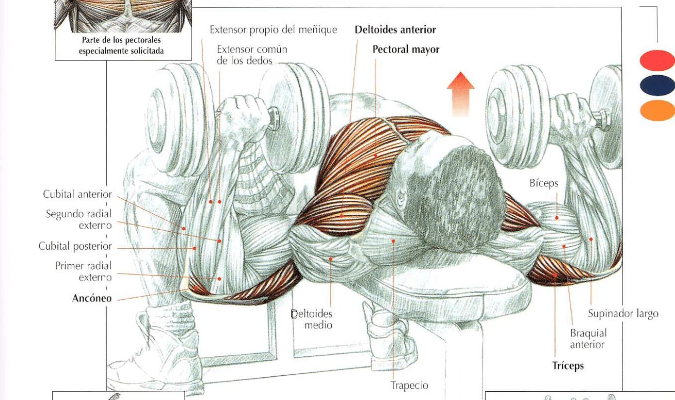 ejercicios para hacer musculos: