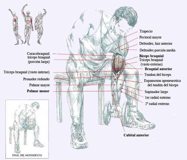 ejercicios con pesas ejercicios en casa
