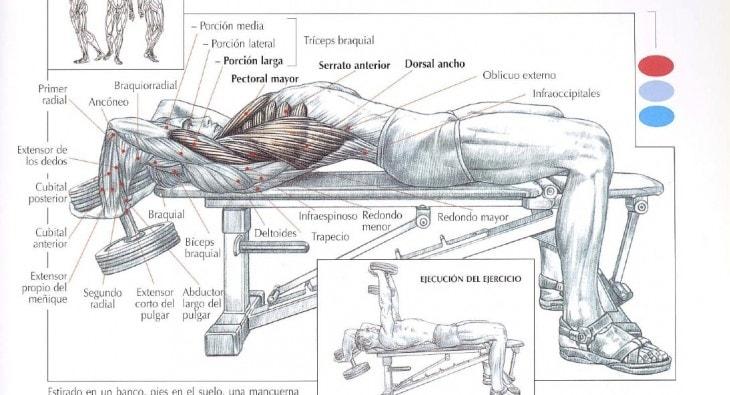 7 ejercicios para pectorales en casa ejercicios en casa - Ejercicios de gimnasio en casa ...