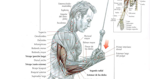 extensión de tríceps en polea agarre invertido