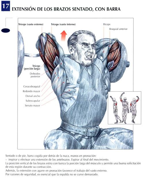 extensión de tríceps con barra