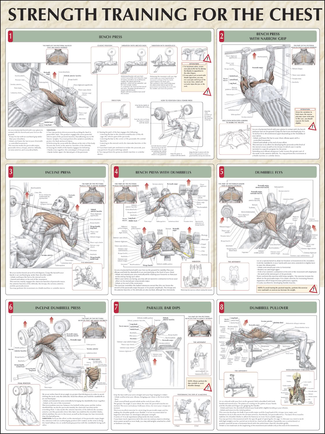 Chest workout routineslower chest exercises d2jsp topic tf6mngkb jpg