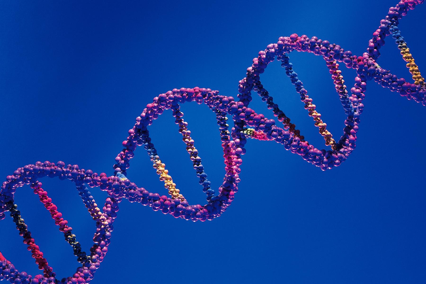 Genética y masa muscular