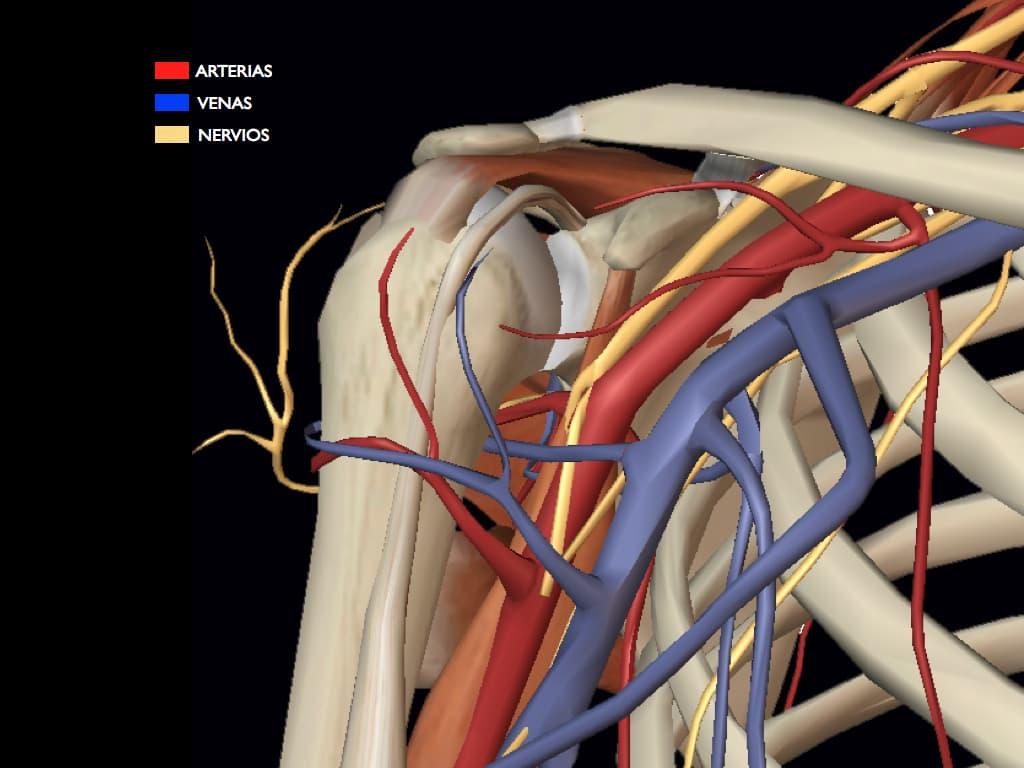 Dolor de hombro: Razones por las que nos lesionamos los rotadores ...
