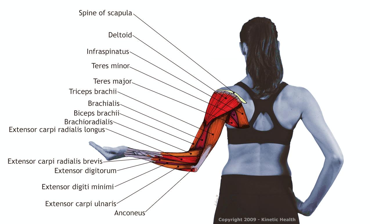 Ejercicios para el hombro