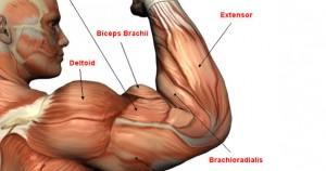Entrenamiento para bíceps y tríceps