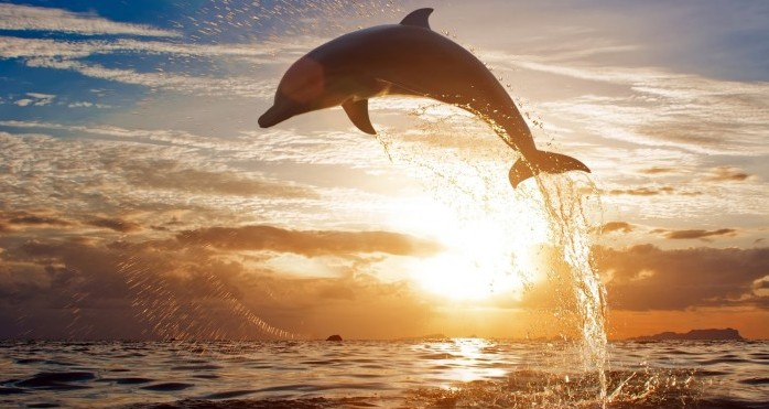la plancha del delfín