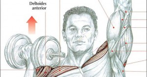 rutina de ejercicios para hombro