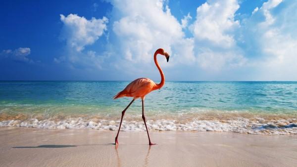 balanceo del Flamingo