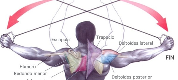 Cómo fortalecer los hombros