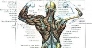 Puntos débiles: Espalda