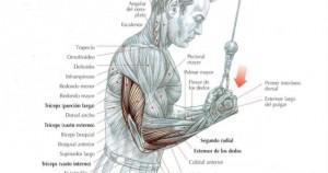 Puntos débiles: Tríceps