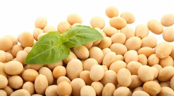Alimentos con proteína para vegetarianos