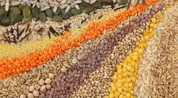 Semillas nutritivas