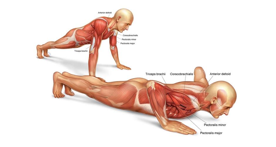 flexiones con palmada al pecho