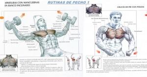 ganar masa muscular en el pecho
