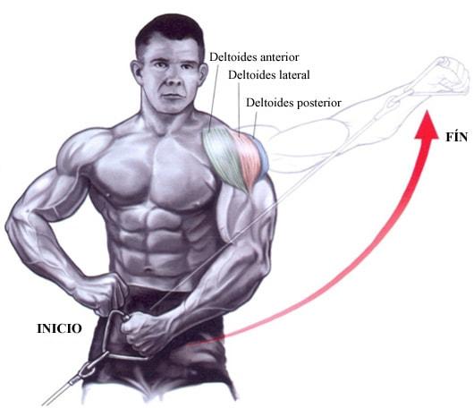 ganar fuerza en los hombros