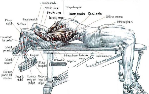 Ejercicios para desarrollar el pectoral