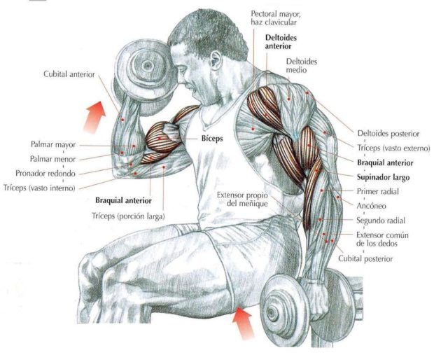 curl-de-biceps-alternos-supinacion