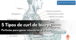 tipos-de-curl-de-biceps