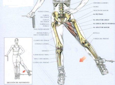 Maquinas de remo: Función del aductor: Ejercicios y uso del músculo ...