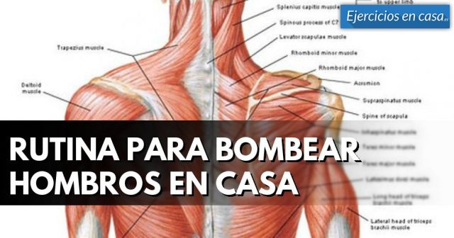 hombros musculados
